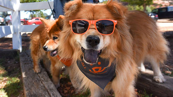 BOBS for Dogs - Strut your Mutt - Dog in Sunglasses