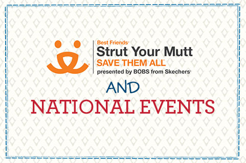 BOBS for Dogs - Strut Your Mutt and National Events